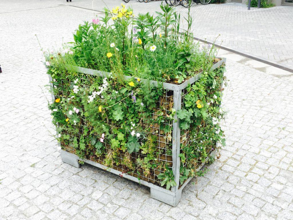 Blumen Kiezplatz Möckernkiez Gitterbox